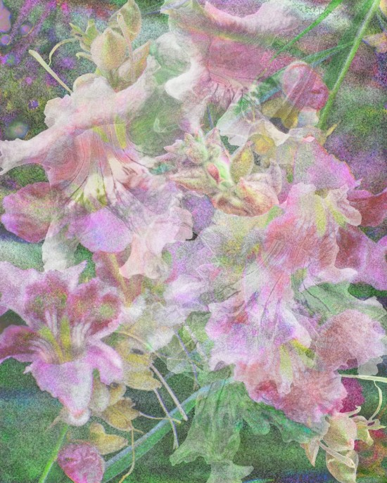 Floral Fantasy 2, Digital Fine Art Printed on Archival Photo Rag 40