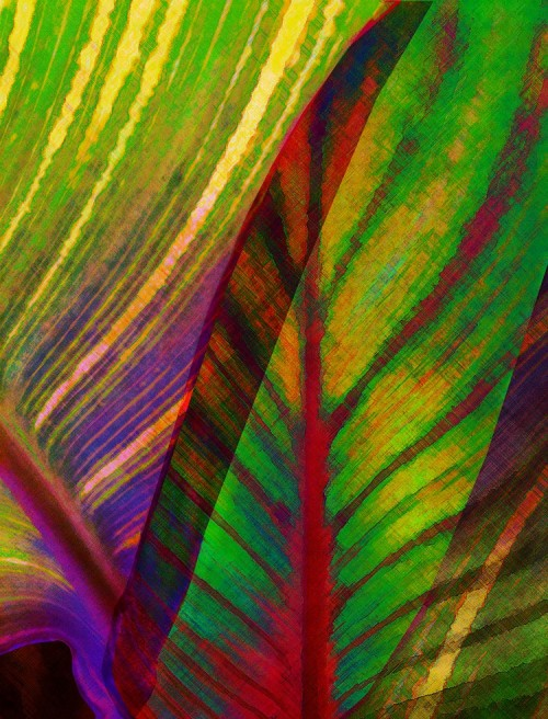 Tropical Abstract 1 21